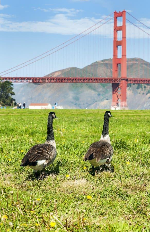 Download Мост Сан-Франциско стоковое изображение. изображение насчитывающей известно - 33727529