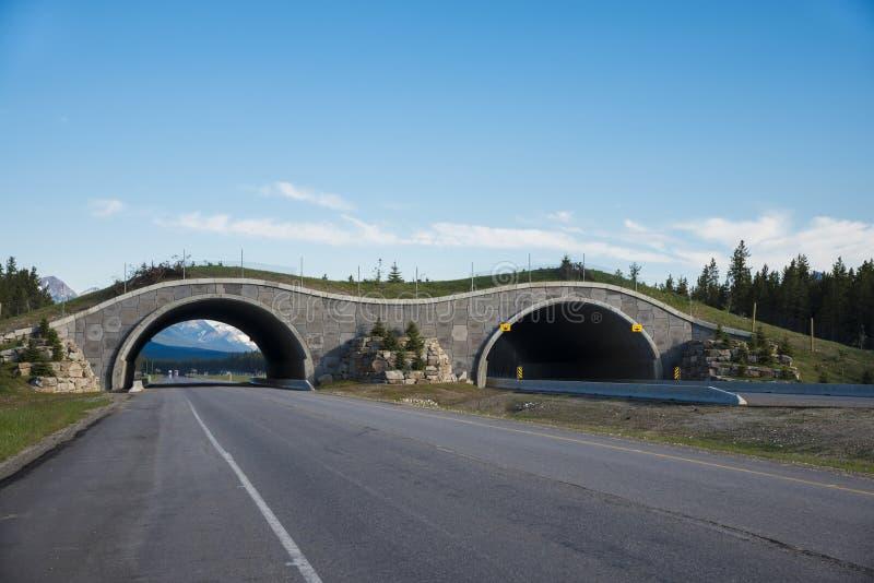 Мост скрещивания хайвея для животных стоковое фото