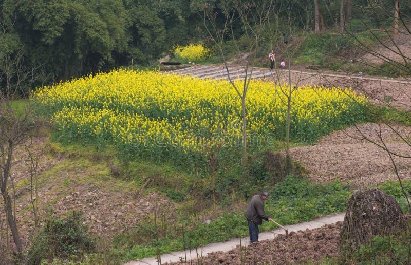 Мотыжа фермер стоковое изображение rf