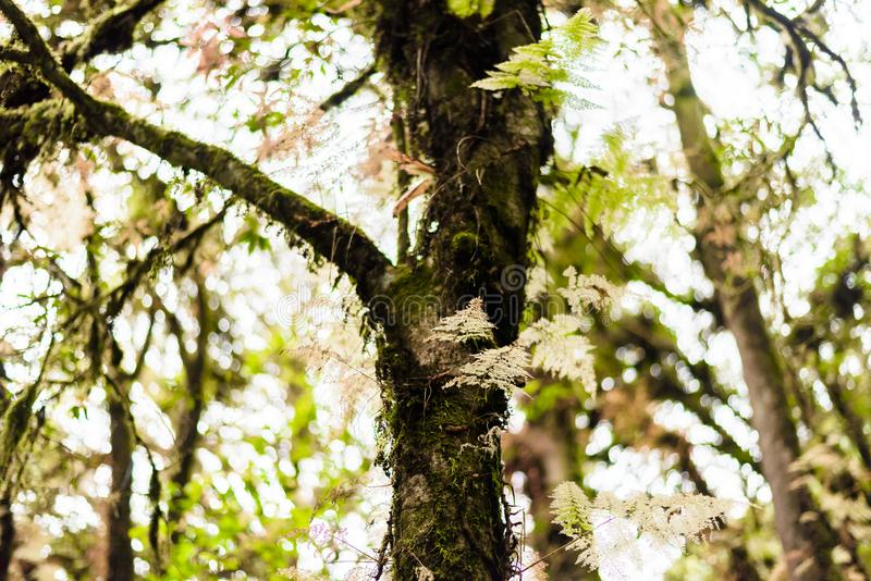 Мох, дерево папоротника в следе природы Luang Ka Ang стоковое фото rf