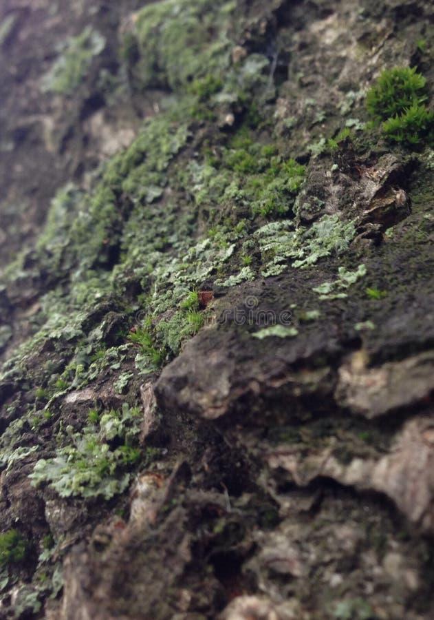 Мох дерева стоковые изображения rf