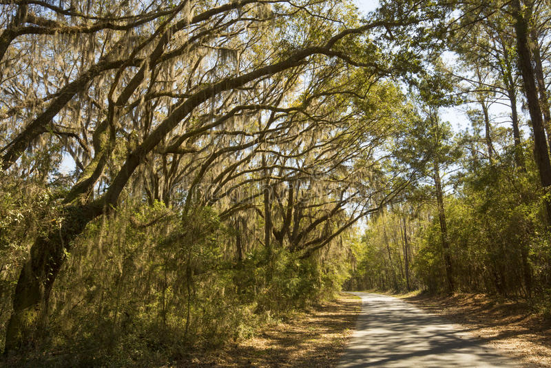 Мох задрапировал деревья на охраняемой природной территории шеи Херриса национальной, Georg стоковые изображения rf