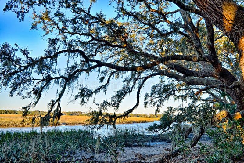 Мох задрапировал дуб в реальном маштабе времени над рекой Edisto на заливе Plantat ботаники стоковое фото