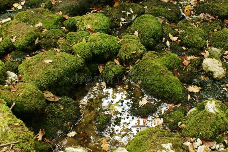 Мох зеленого цвета природы предпосылки на валунах, листьях осени, и лужице воды стоковые изображения rf