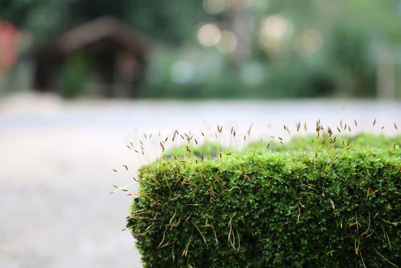Мох и водоросли на утесах стоковые изображения rf