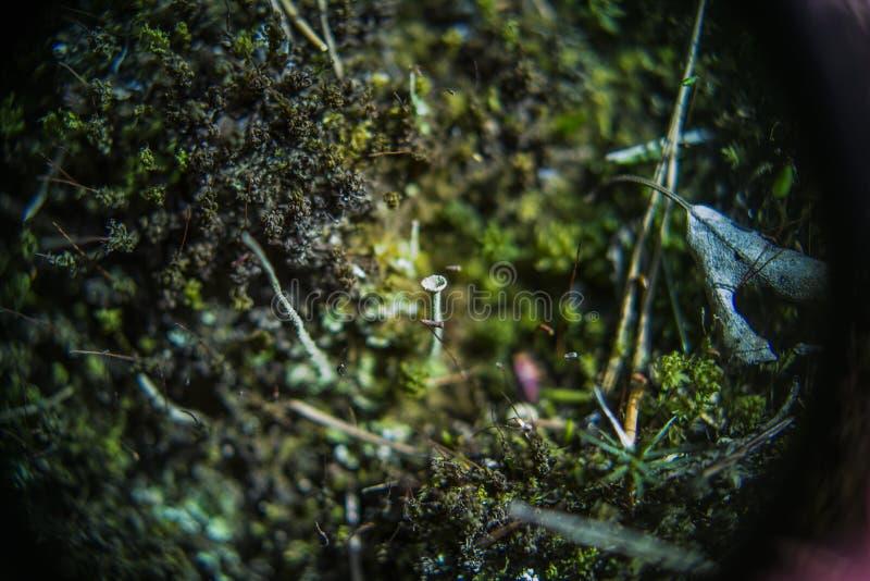 Мох и cladonie глубоко в лесе стоковое изображение rf