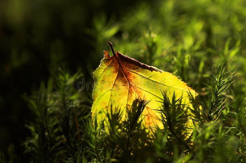 мох листьев стоковое изображение rf
