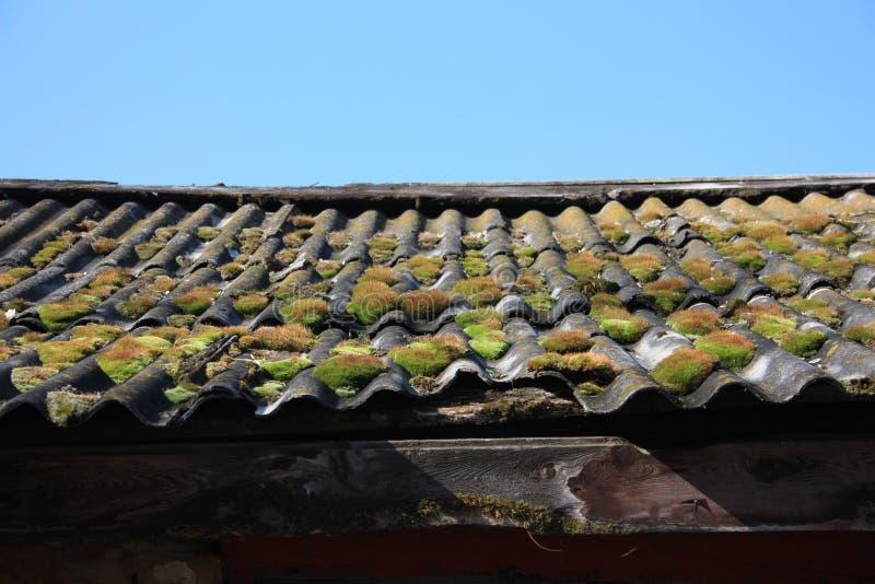Мох на крыше и голубом небе Сравнивать красивый стоковые изображения rf