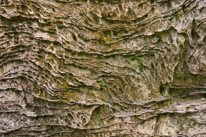 мох на стороне утеса стоковое фото