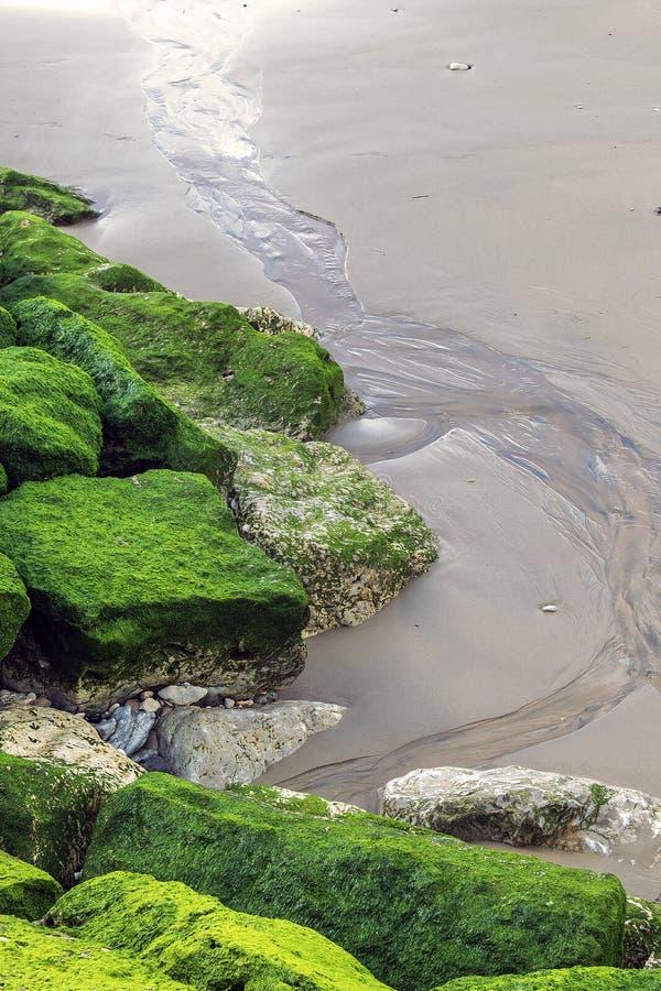 Мох на утесах на пляже стоковые изображения rf