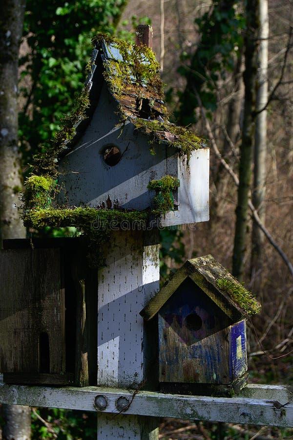 Мох на Birdhouses стоковая фотография