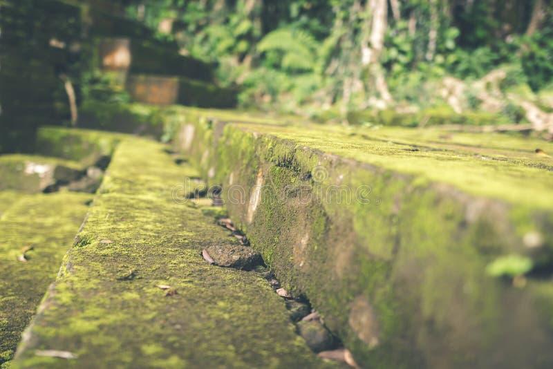 Мох покрыл каменные шаги в балийский индусский висок Тропический остров Бали, Индонезии Предпосылка мха стоковые фото