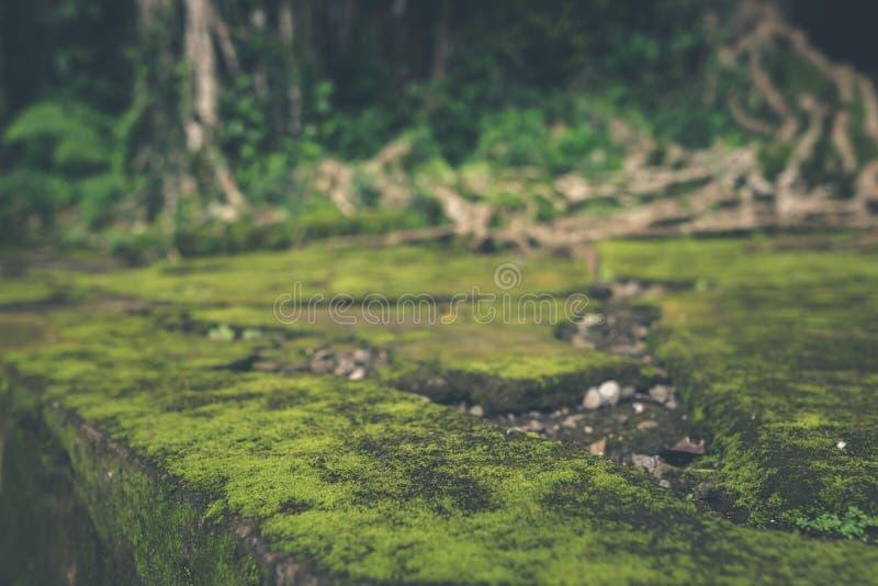 Мох покрыл каменные шаги в балийский индусский висок Тропический остров Бали, Индонезии Предпосылка мха стоковые фотографии rf