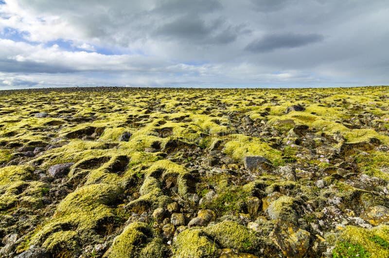 Мох предусматривал ландшафт с далеким взглядом к горизонту и облакам стоковое изображение rf