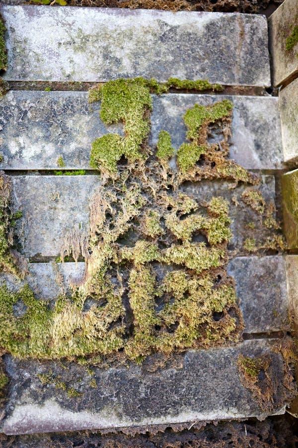 Мох растя на старой каменной стене стоковое фото rf