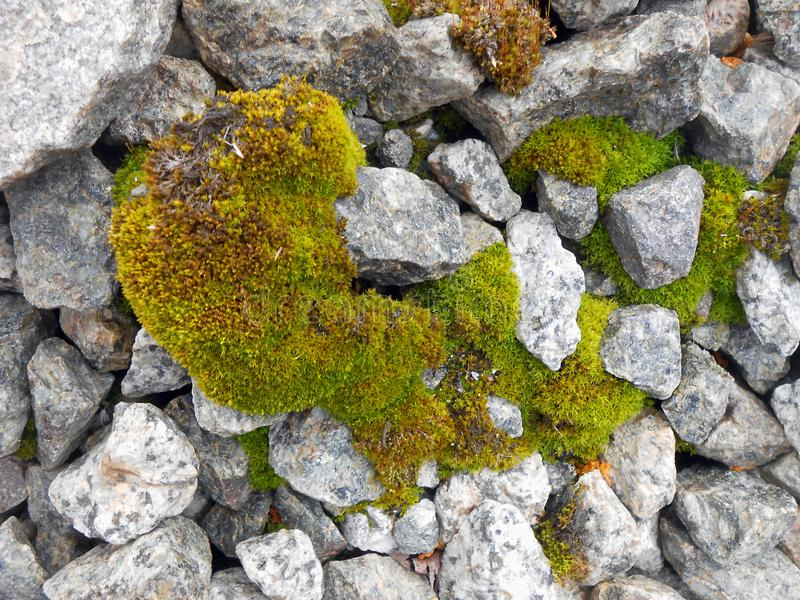 Мох текстуры предпосылки пушистый зеленый стоковые фото