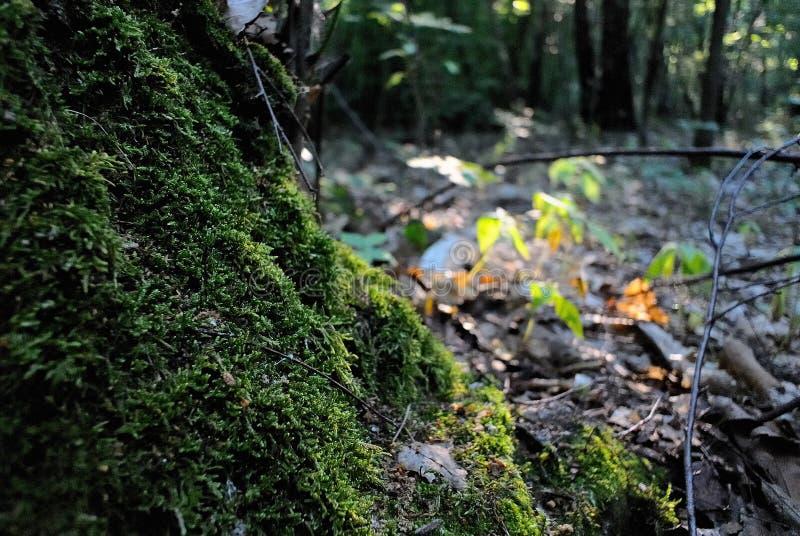 мох толщиной стоковое фото