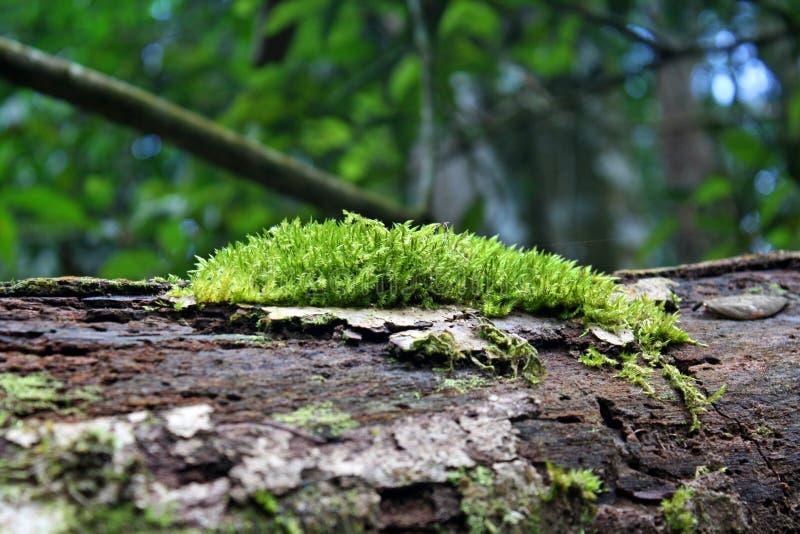 мох Стоковые Изображения RF