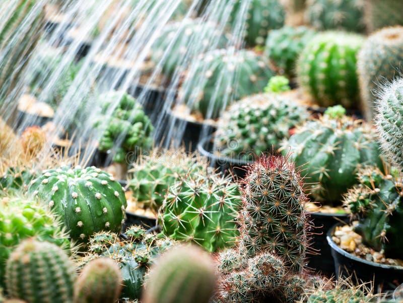 Мочить в саде кровати кактуса стоковое фото rf
