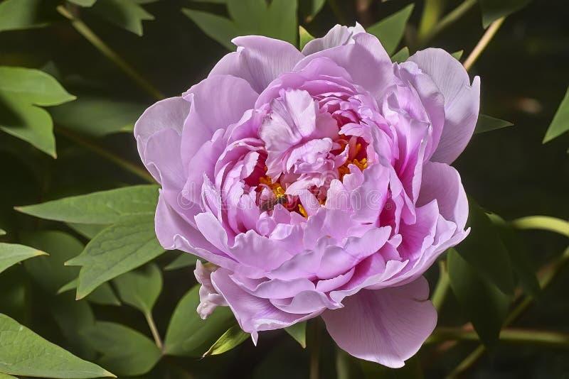 Мощный цветок стоковые фото