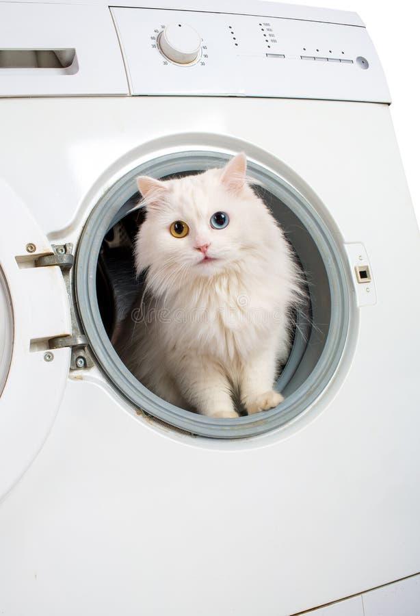 Моющее машинаа и кот стоковая фотография rf