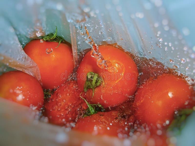 Моя свежие томаты стоковая фотография rf