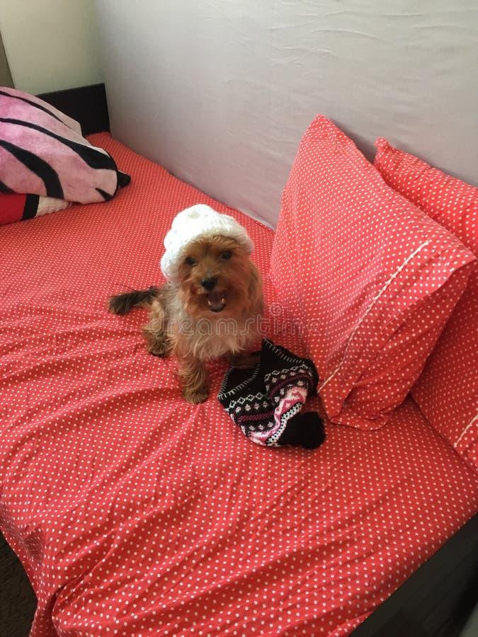 Моя собака подготавливая для собрания зимы стоковая фотография rf