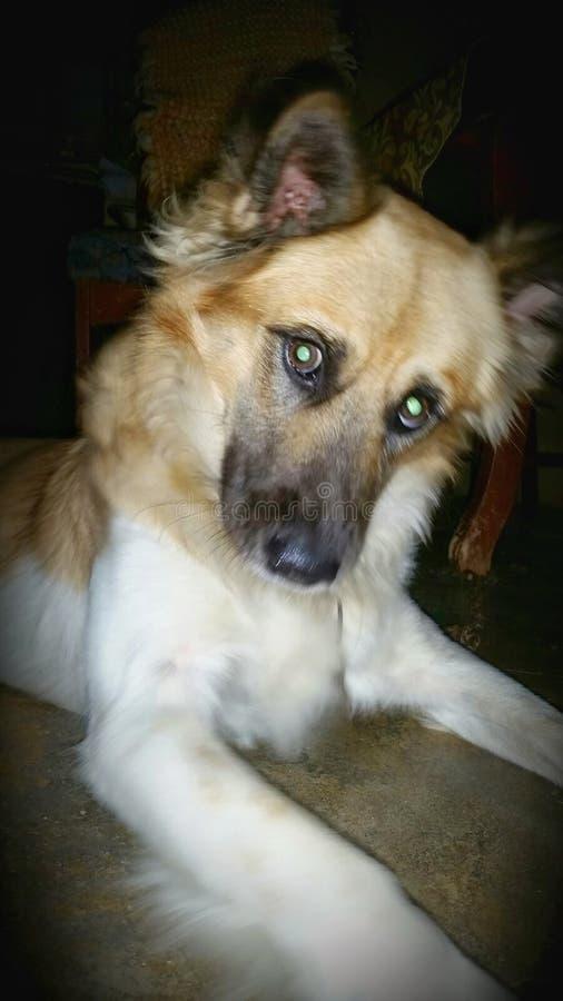 Моя собака стоковые изображения rf