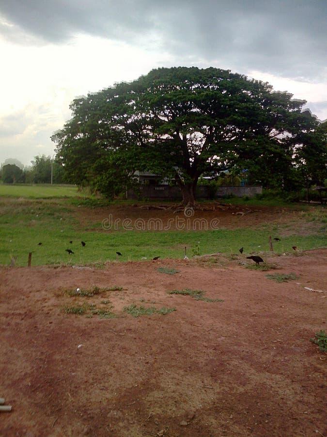 Моя ферма стоковое изображение rf