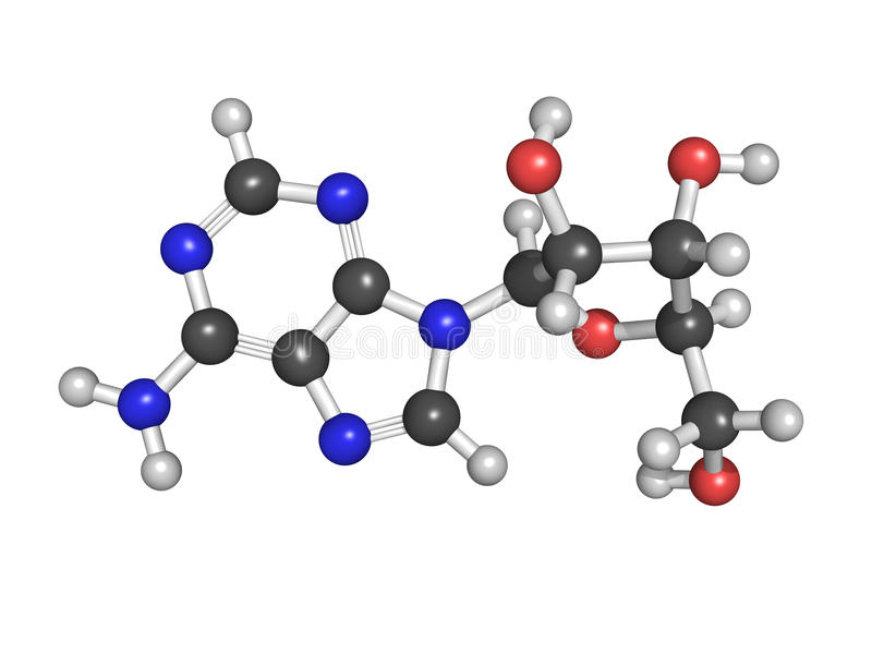 Молекула нуклеозида аденозина (a), химическое строение. Это o бесплатная иллюстрация