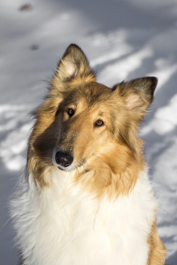 Модельная собака Rena стоковое изображение