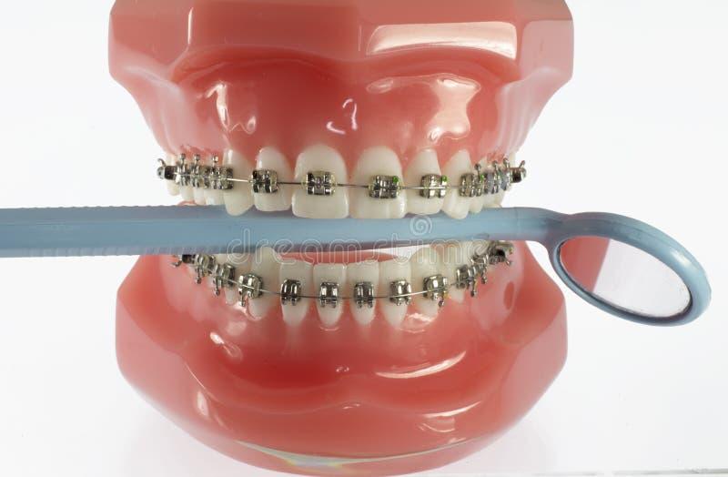 Модель зубов при расчалки держа зубоврачебное зеркало стоковое фото rf