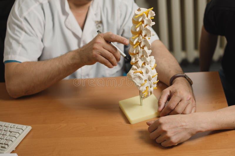 Модель позвоночника в heands доктора Доктор говоря с пациентом стоковая фотография rf