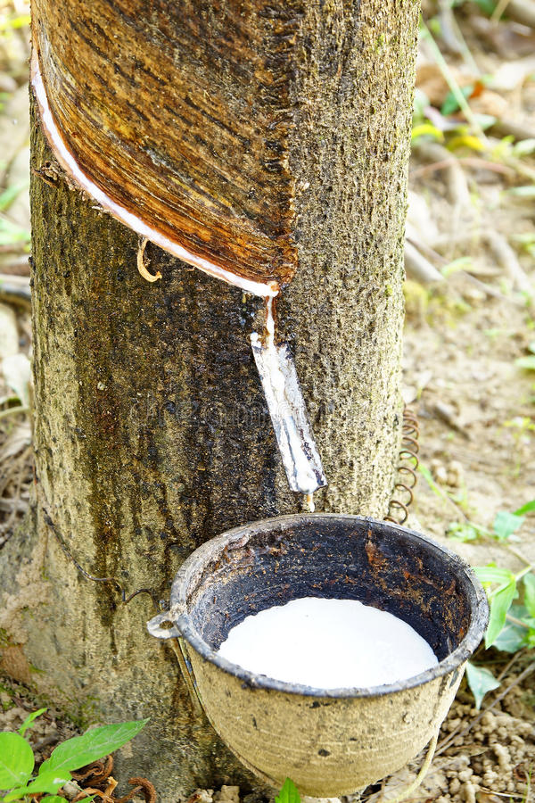 Download Молоко резинового дерева в шар. Стоковое Изображение - изображение насчитывающей environment, промышленно: 37929375