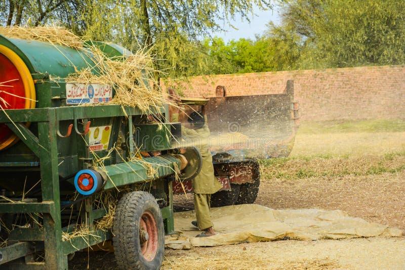 Молотить пшеницы стоковая фотография rf