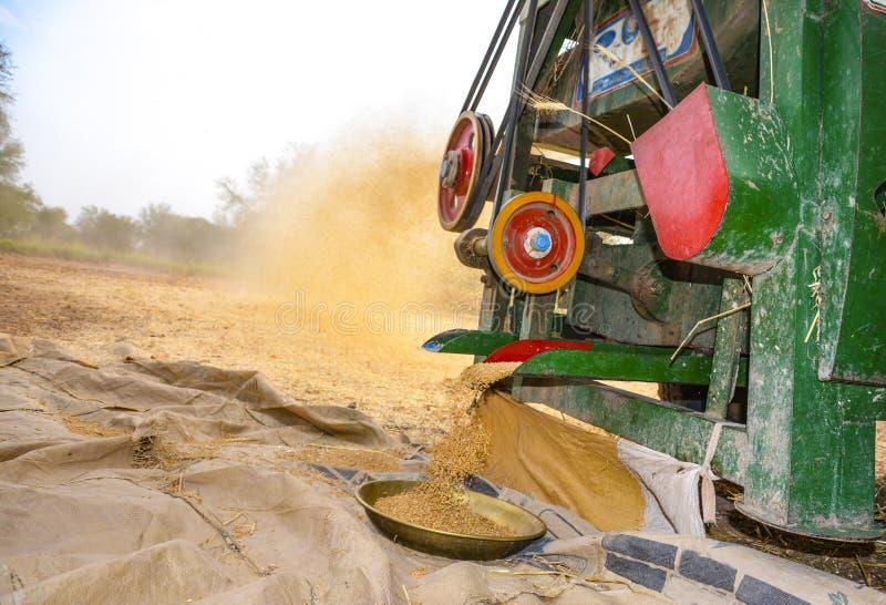 Молотить пшеницы стоковые изображения rf