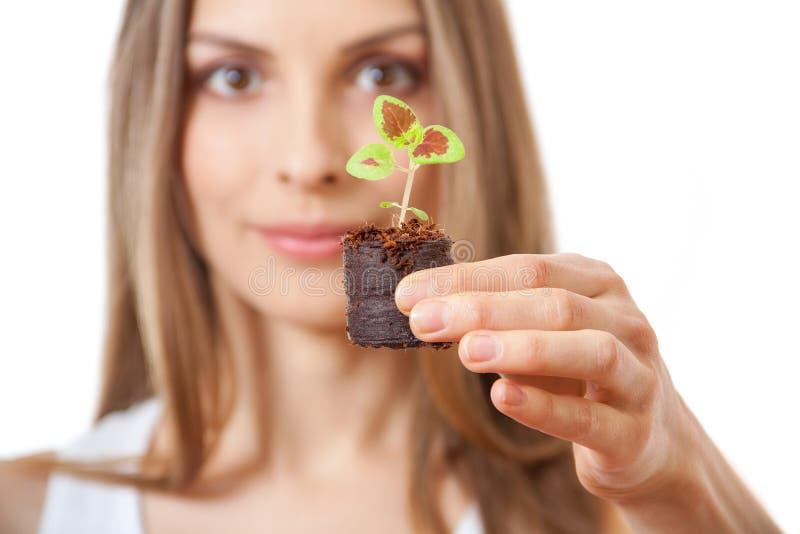 Молодая женщина держа завод, росток coleus стоковая фотография