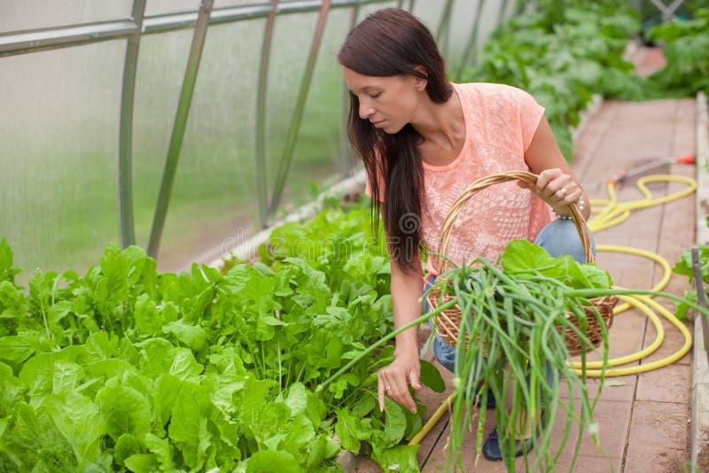 Download Молодая женщина держа корзину растительности и лука Стоковое Изображение - изображение насчитывающей корзины, greenery: 40586339