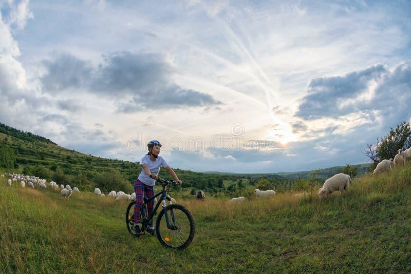 Молодая женщина ехать ее велосипед на сельском следе стоковое фото