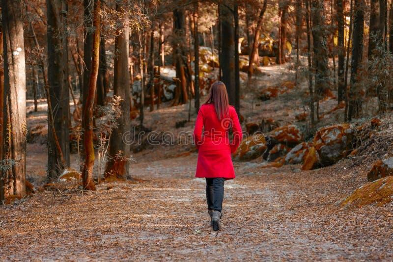 Молодая женщина идя прочь самостоятельно на путь леса стоковое изображение