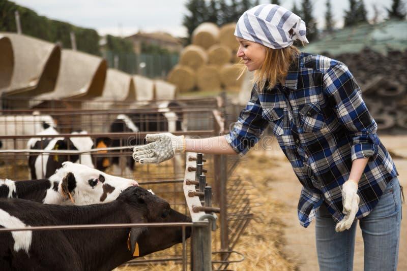 Молодая женщина позаботить о молочное стадо в ферме поголовья стоковое фото