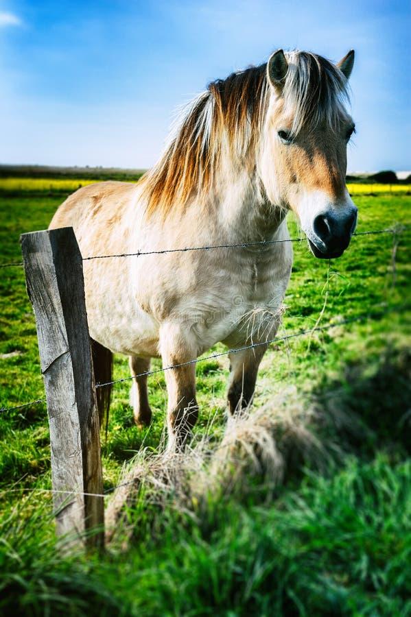 Молодая лошадь на зеленом поле стоковые фото