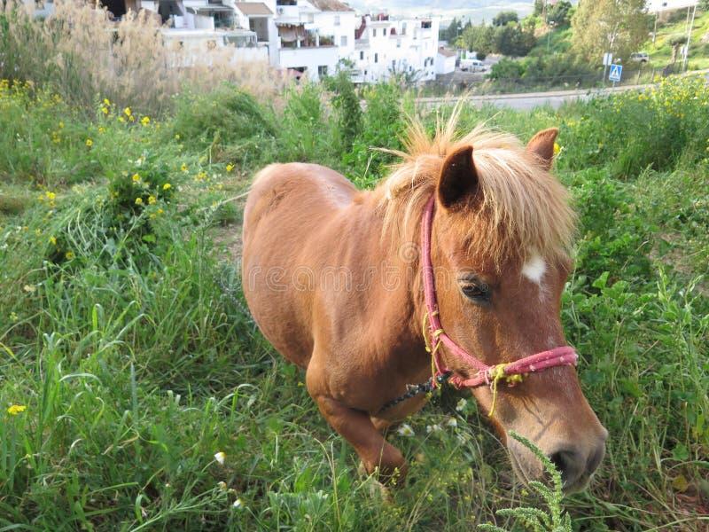 Молодая лошадь пася на цветках весны стоковое изображение rf