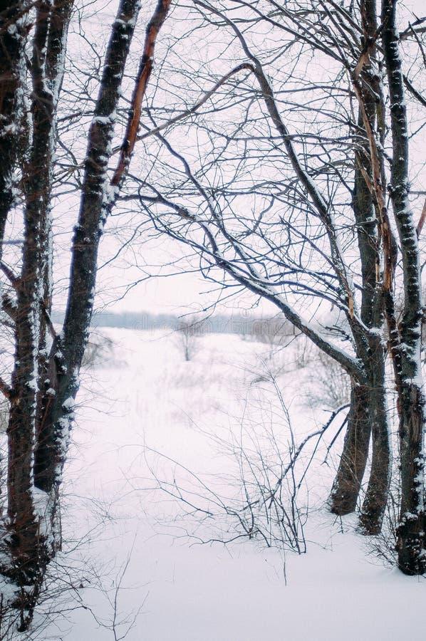 Download Молодая привлекательная девушка обнимая снег в зиме Portr зимы Стоковое Изображение - изображение насчитывающей головка, outdoors: 81814621