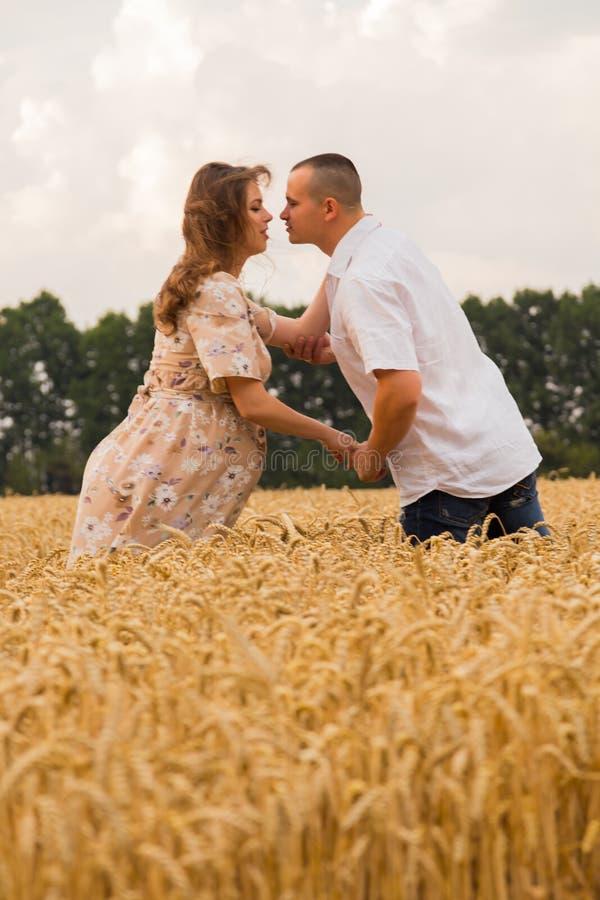 Молодая середина пар пшеничного поля стоковое изображение