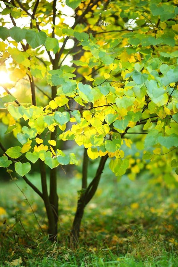 Молодое дерево с зеленым цветом и желтым цветом выходит в солнечный свет стоковые изображения