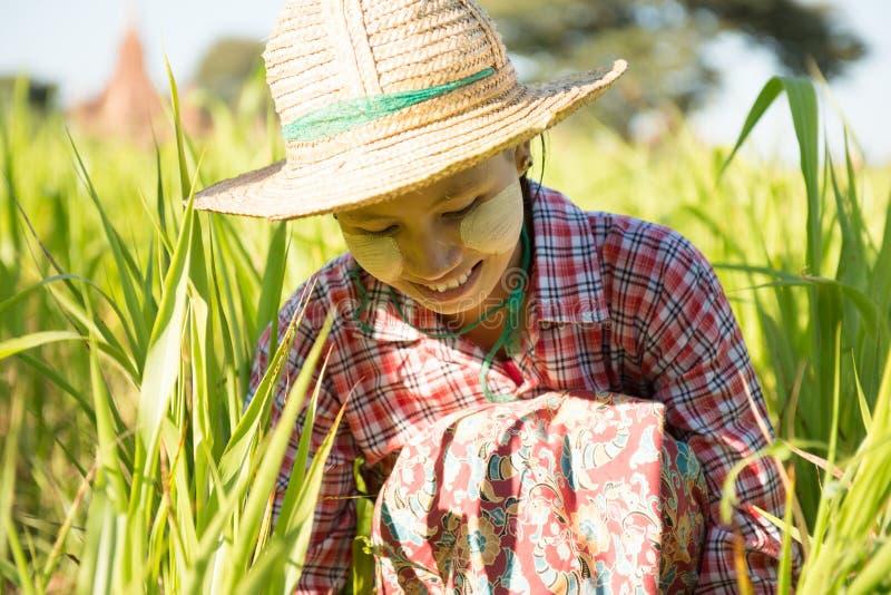 Молодой азиатский бирманский женский фермер стоковое изображение rf