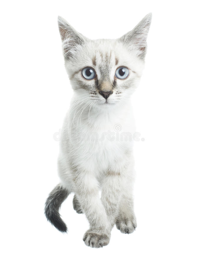 Молодой бег кота стоковая фотография