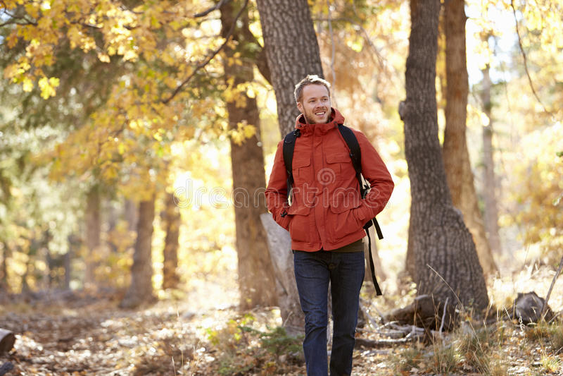 Молодой взрослый кавказский человек идя в лес стоковые изображения rf