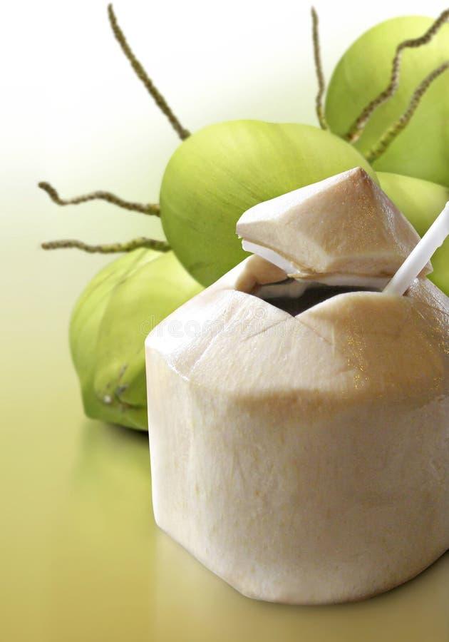 Молодой кокос стоковые фото